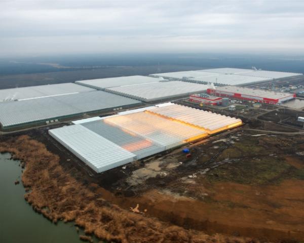 «Зеленая линия» приступила к строительству центра по выращиванию шампиньонов в Краснодаре