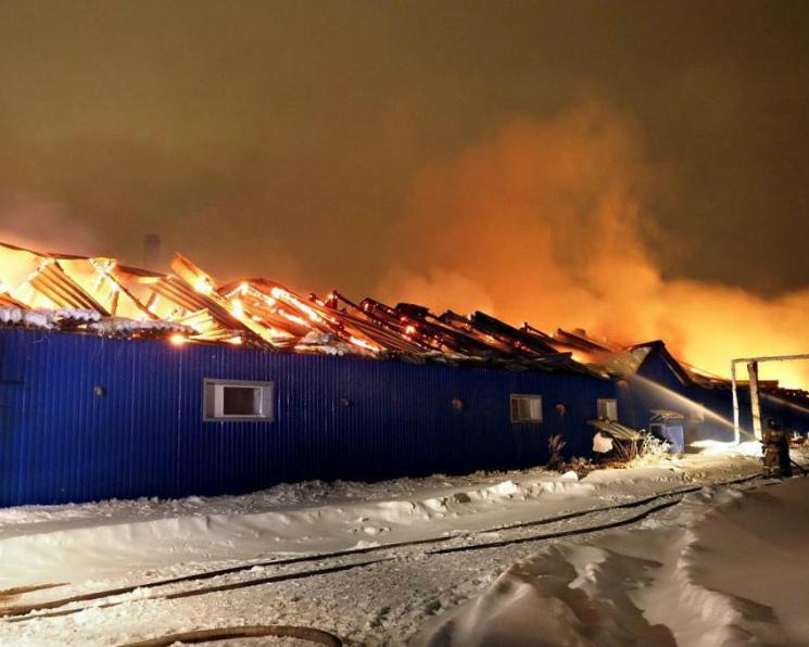 Пожар уничтожил 10 тысяч кур в подмосковном генофондном хозяйстве