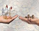 ФАС: повышение цен на мясо кур обоснованно