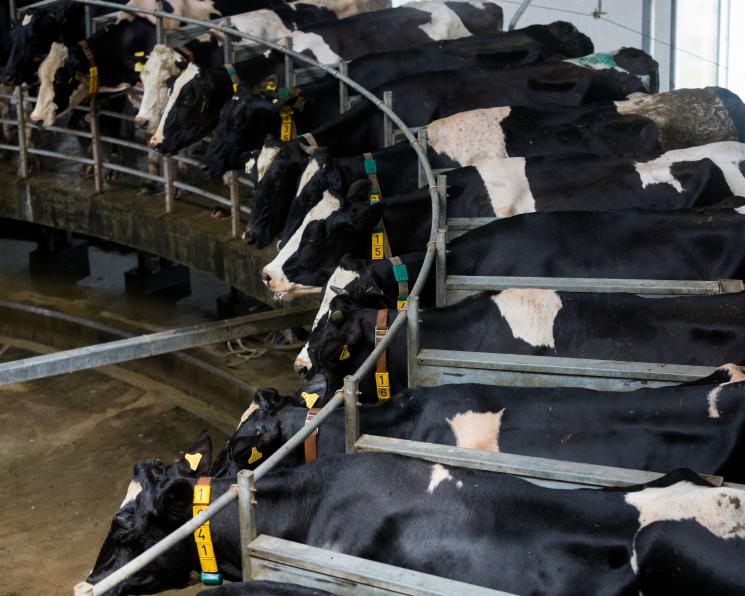 «ЭкоНива» удвоит выпуск молока в2018 году