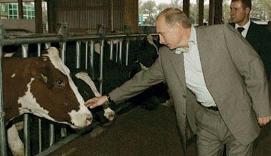 Путинская восьмилетка