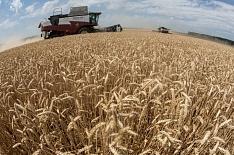 Росстат повысил урожай зерна в 2017 году на 100 тысяч тонн