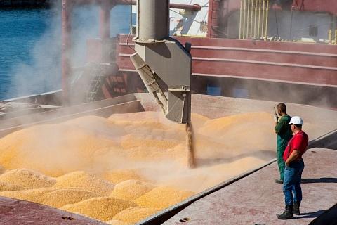 Россия может сохранить лидерство в экспорте пшеницы