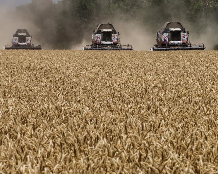 АПК завершит год ростом производства