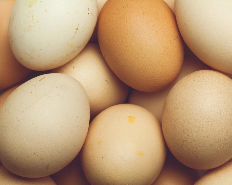 «Лето» инвестирует 2,2 млрд рублей вобанкротившуюся «Заокскую птицефабрику»