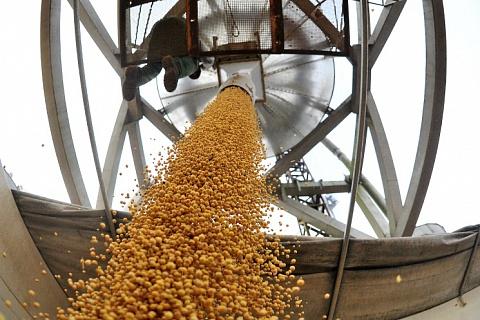 Экспорт сои сократился почти на четверть