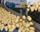Картофель срентабельностью нефти