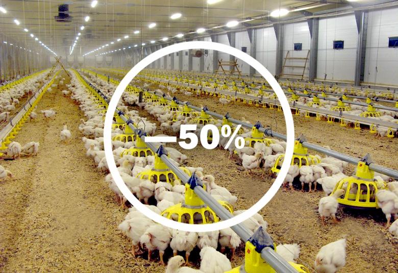 Импорт птицы уменьшился на 50%