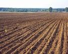 Минэкономразвития планирует ввести штрафы за неиспользование земельных участков