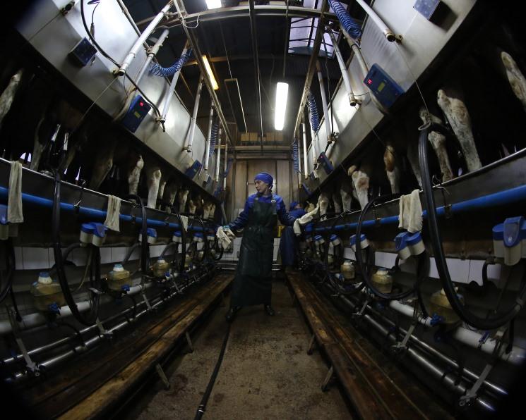 Рейтинг производителей молока возглавили «ЭкоНива» и «Агрокомплекс»