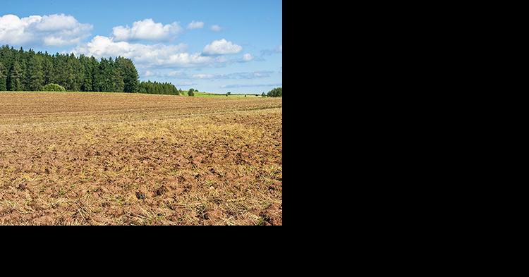 Деградация на миллиарды: в России истощены свыше 60% сельхозугодий