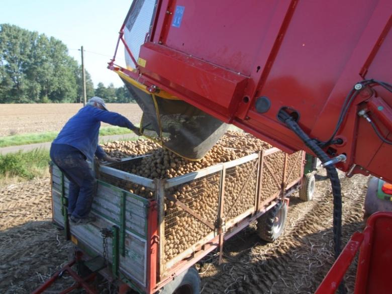 Минус 5 млн тонн картофеля