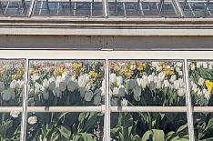 Импортер цветов построил теплицу в Смоленской области