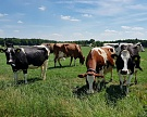 «Мираторг» покупает молочную ферму и землю в Орловской области