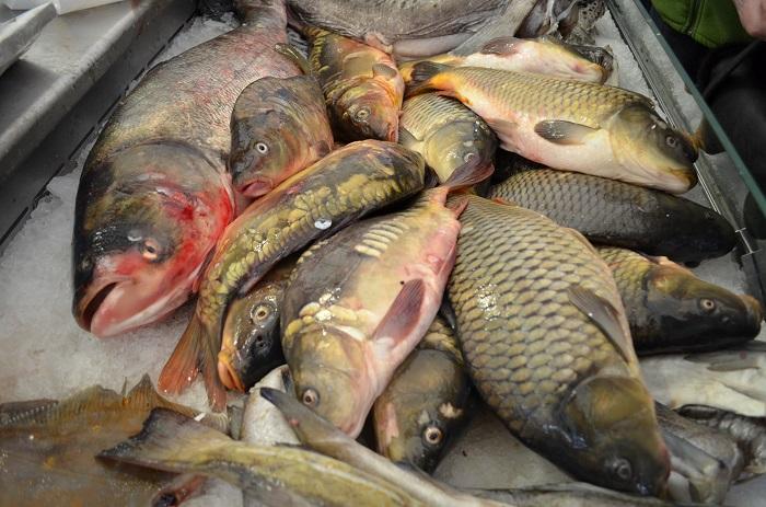 За три месяца 2015 года экспорт рыбопродуктов снизился на 10,7%
