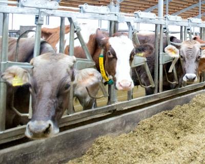 Молочная отрасль стагнирует, но инвесторы не теряют оптимизма