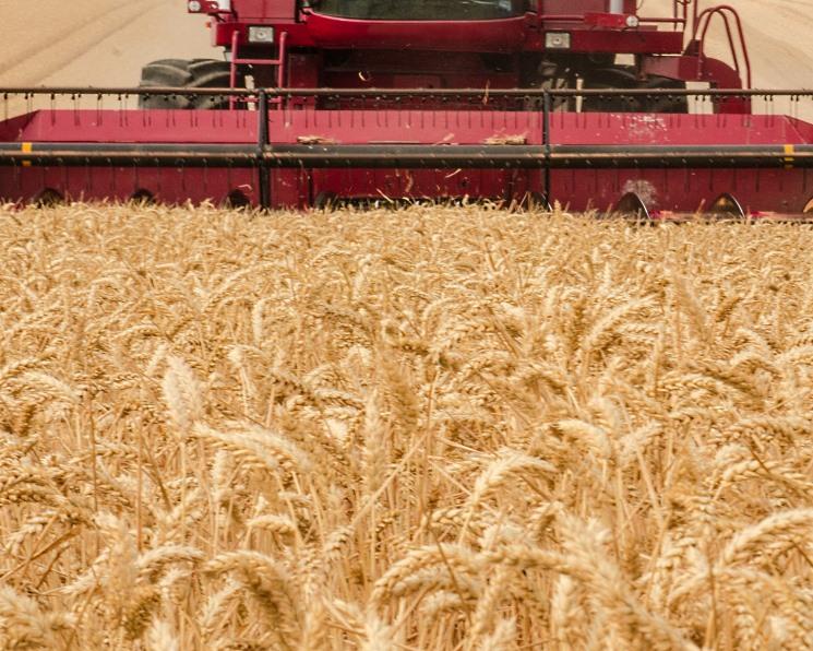 Урожайность зерновых снизилась на 21%
