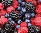 Совладелец «АФГ Националь» инвестирует впроизводство ягод