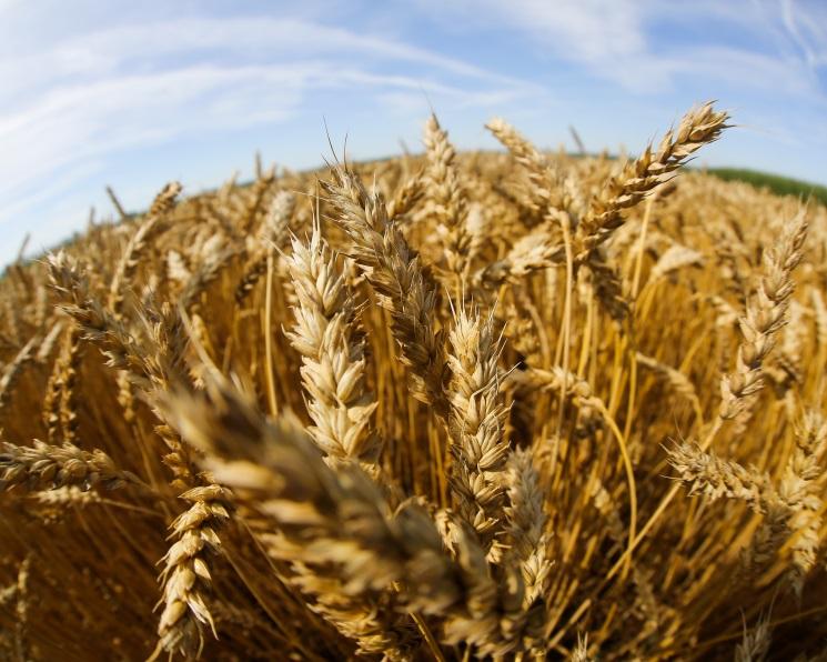 10 регионов произвели почти 40% сельхозпродукции встране