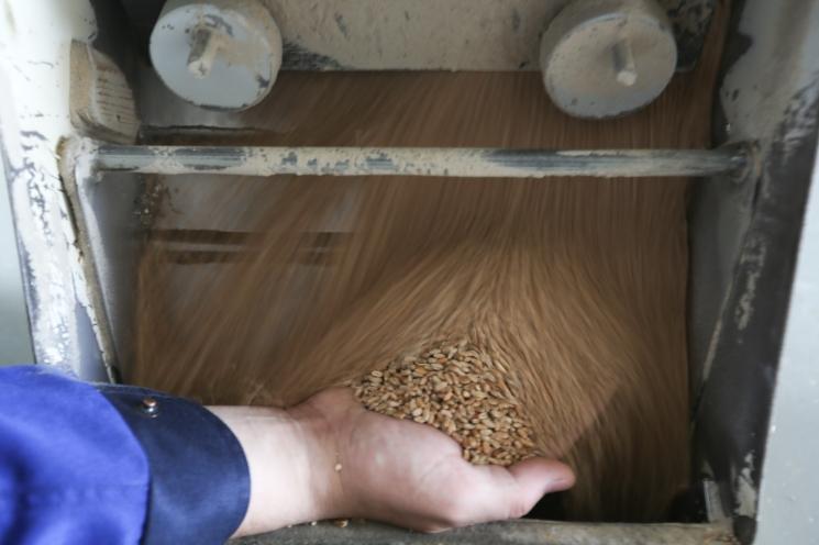 Экспортерам рекомендовано незакупать зерно уторговых домов