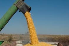 В России началась уборка кукурузы