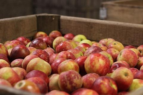 Одна из богатейших женщин России вложит 6 млрд рублей в яблочный бизнес