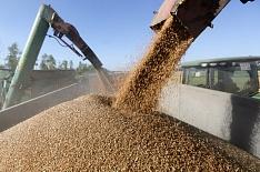 В2018 году сельское хозяйство вырастет меньше чем на1%