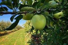 «Эко-культура» вложит 5,6 млрд рублей в садоводство