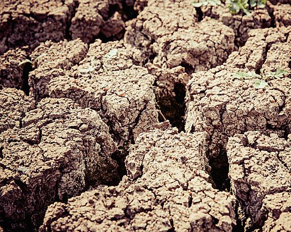 Засуха— главный риск растениеводов