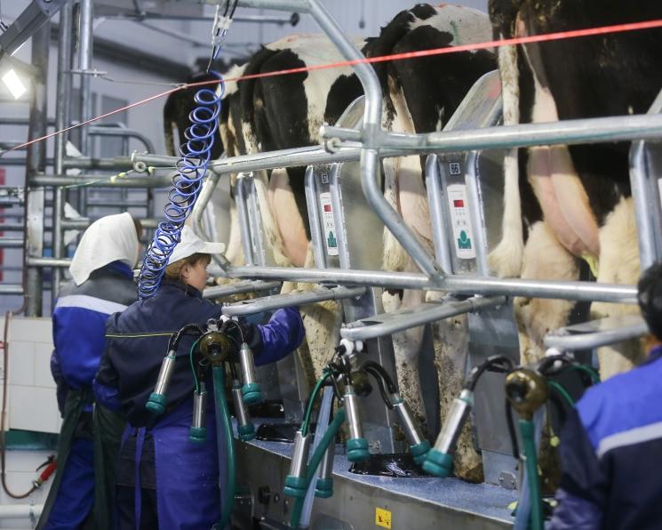 «Союзмолоко»: закон о парниковых газах угрожает молочной отрасли