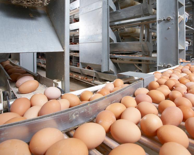 Яичная отрасль столкнулась с дефляцией. Цены на яйцо вернулись на уровень 2013 года