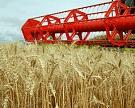В России намолочено 78,8 млн т зерна