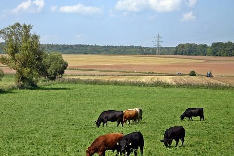 «Мираторг» покупает 7 тысяч гектаров на Ставрополье