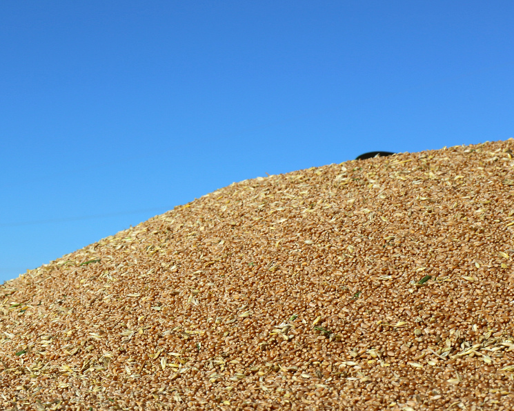 Экспорт зерна поитогам сезона может вырасти на20%