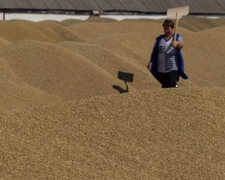 Экспортные цены на пшеницу достигли максимума с февраля прошлого года