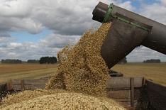 Рентабельность производства зерна в сезоне-2018/19 вырастет