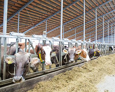Плюс 6 млн т молока за пять лет