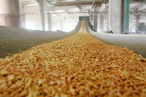 Минсельхоз готовит постановление об ограничении экспорта зерна