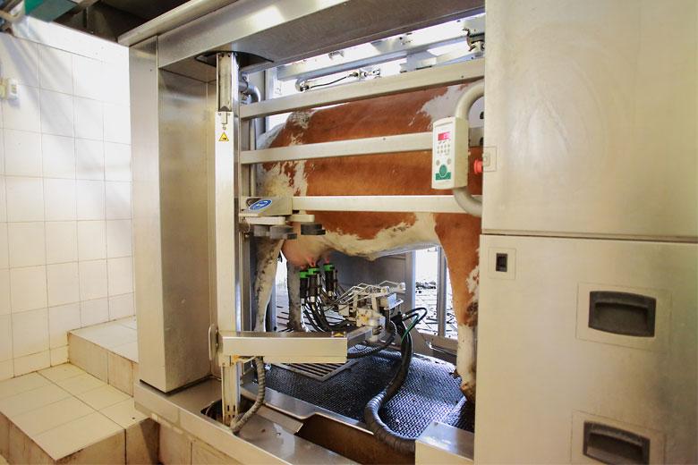 Роботы-дояры в«Калужской Ниве» («ЭкоНива— АПК Холдинг»)