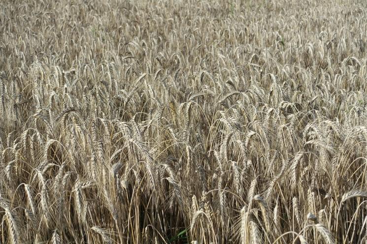 ВРоссии будут созданы правила торговли зерном