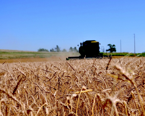 Украинские аграрии в 2016г. соберут 63 млн тонн зерна— Минагрополитики