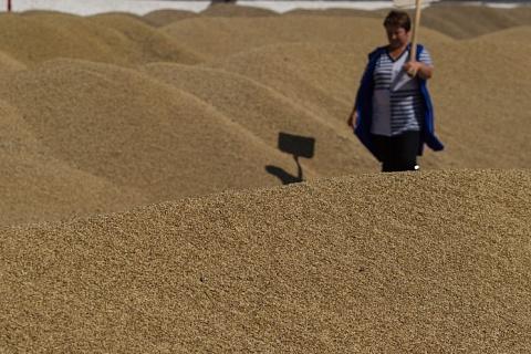 В августе экспорт зерна снизился