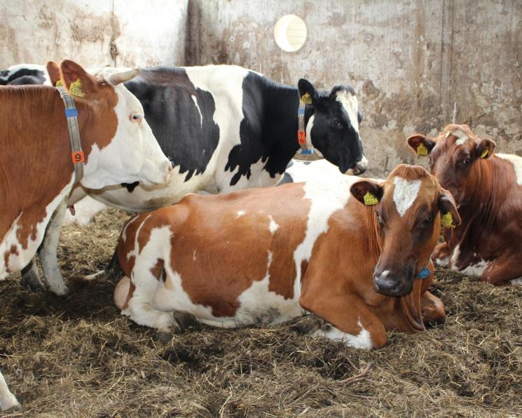 «МадьярАгро» планирует построить две животноводческие фермы