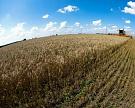 Сбор зерновых достиг 89,3 млн тонн