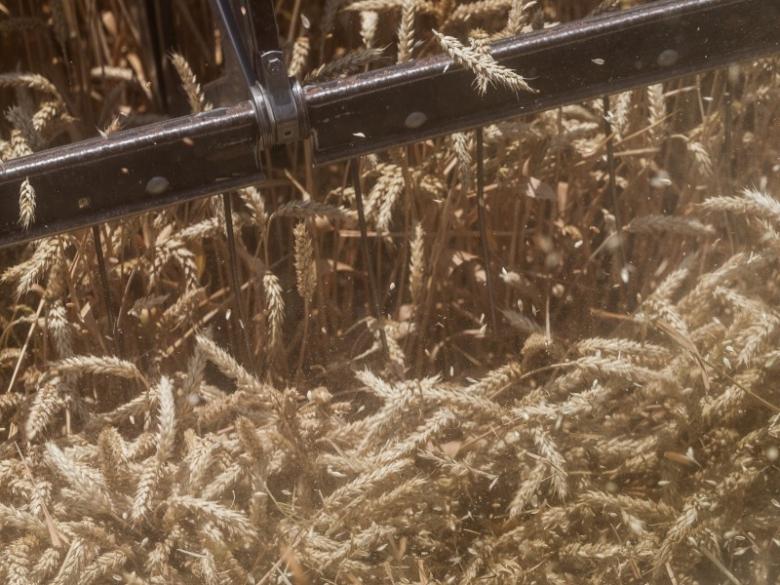 Динамика посевов и урожайности