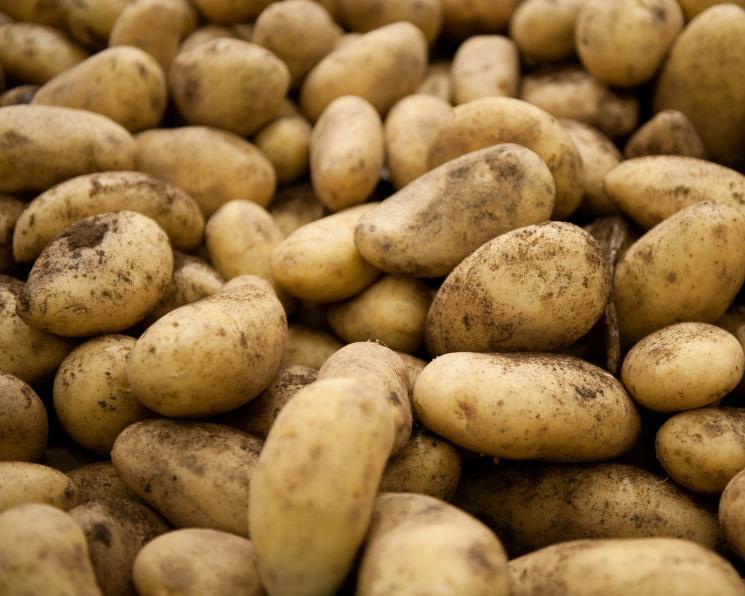 Российский картофель исчез сприлавков