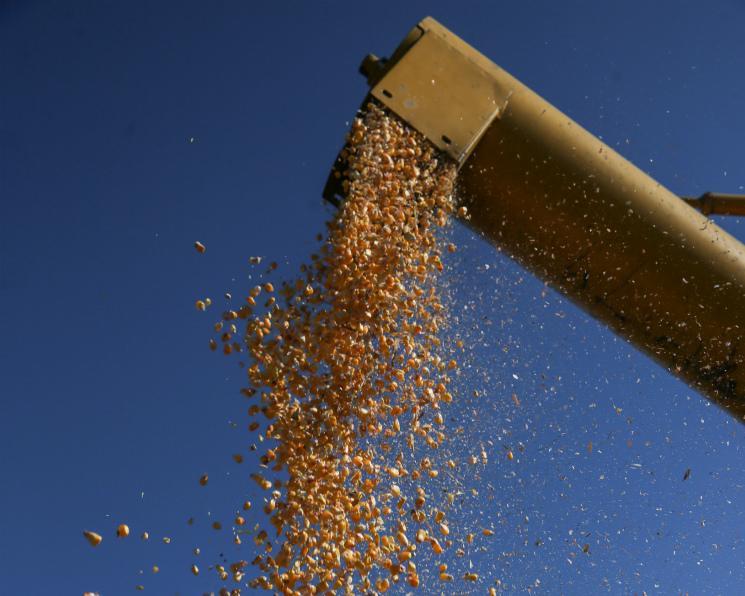 Урожай кукурузы сократится почти на2 млн тонн