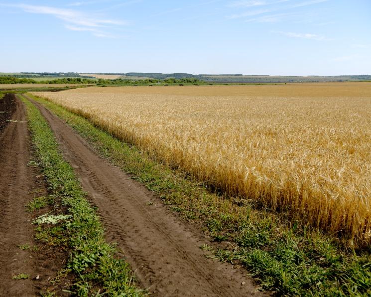 В 2019 году посевные площади в России остались на прошлогоднем уровне — Агроинвестор