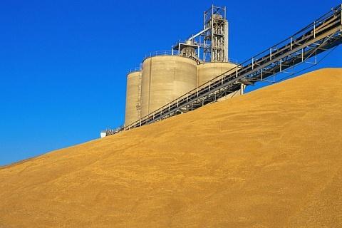 ОЗК намерена вывезти до 2,4 млн тонн зерна в 2019/20 сельхозгоду