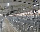 В Башкирии в июне будет запущен новый свинокомплекс